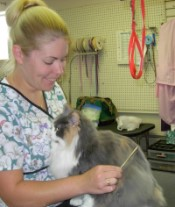 Grooming at Obetz Animal Hospital is easy as calling 614.491.5676